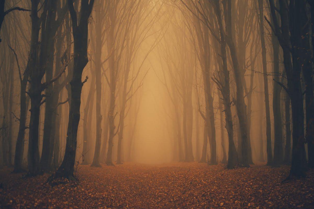 Nebbia Pascoli - Parafrasi