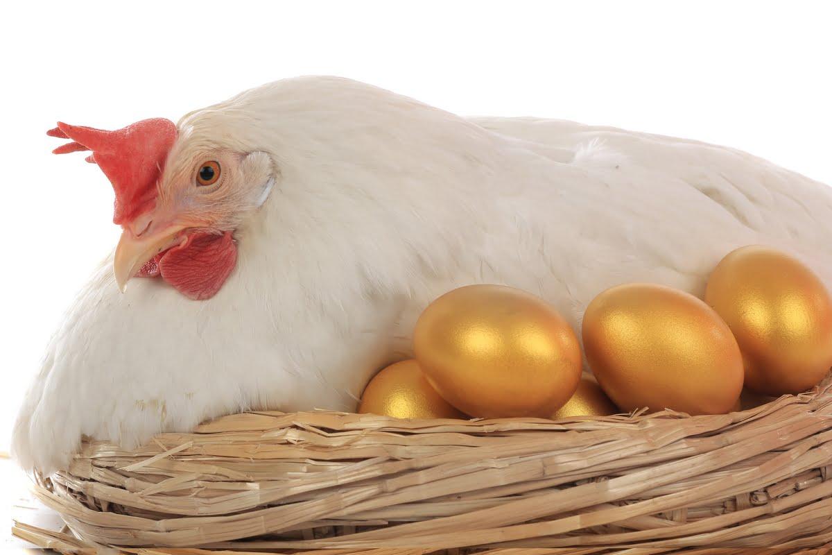 Gallina dalle uova d'oro - Significato - Origine