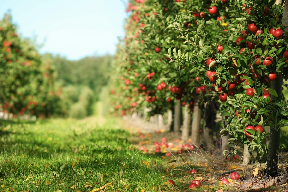 La mela non cade mai lontano dall'albero - Significato
