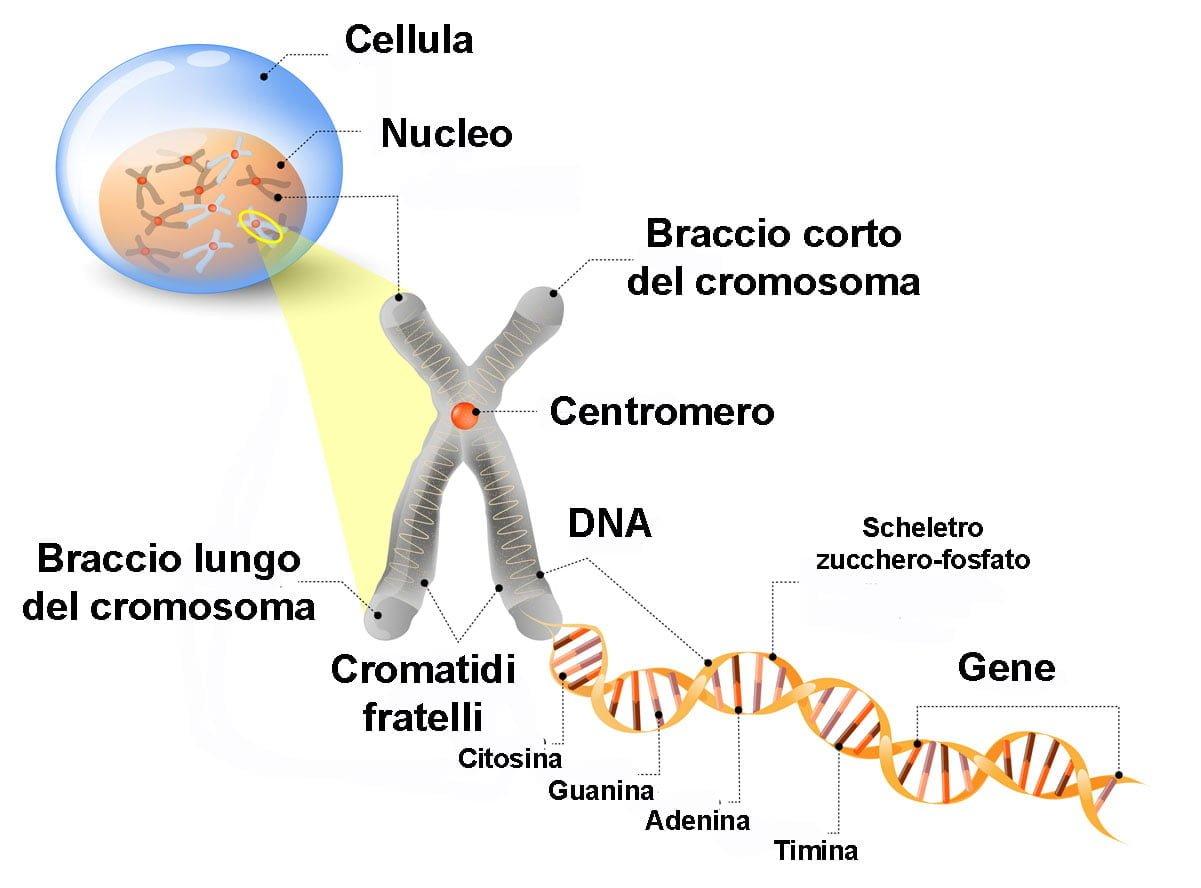 geni genoma